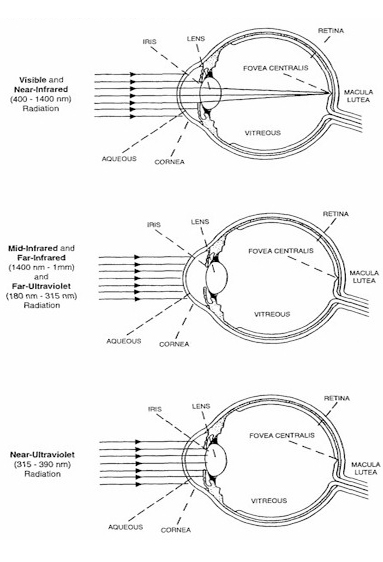 Notice That Visible And Near Infrared Light Are Focused Onto The Retina By  The Eyeu0027s Lens. This Makes The Eye Much More Sensitive To Injury From Light  In ...